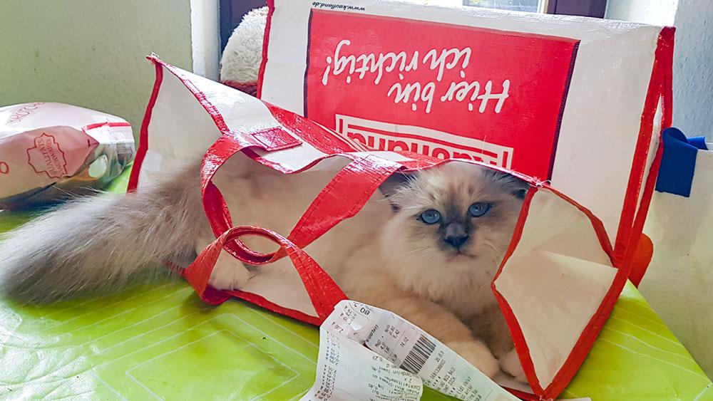Einkaufstasche, für Katzen mit Gefahren