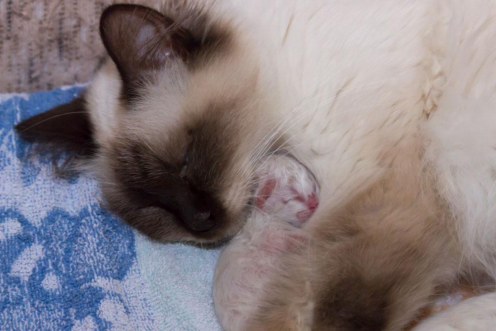 Innige Mutter-Kind-Beziehung, Entwicklung der Katze