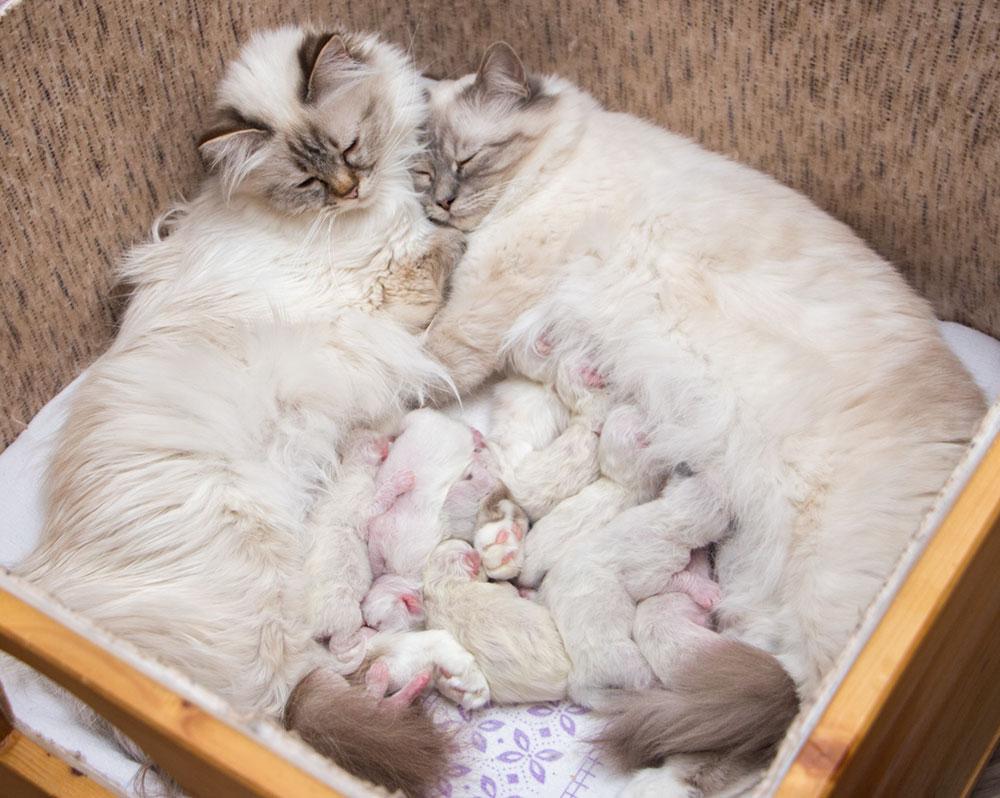 Katzenmütter mit ihren Babys, Entwicklung der Katze
