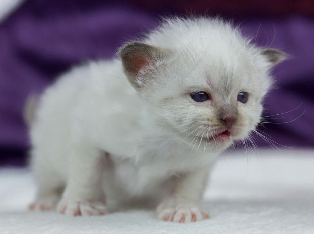 erste Schritte einer Katze - Entwicklung Katze