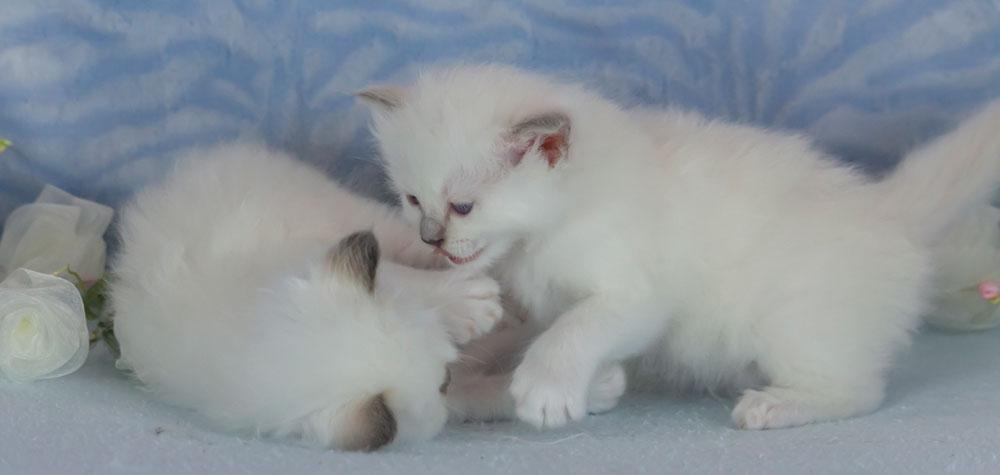 Erste Spiele der Geschwister - -Entwicklung Katze