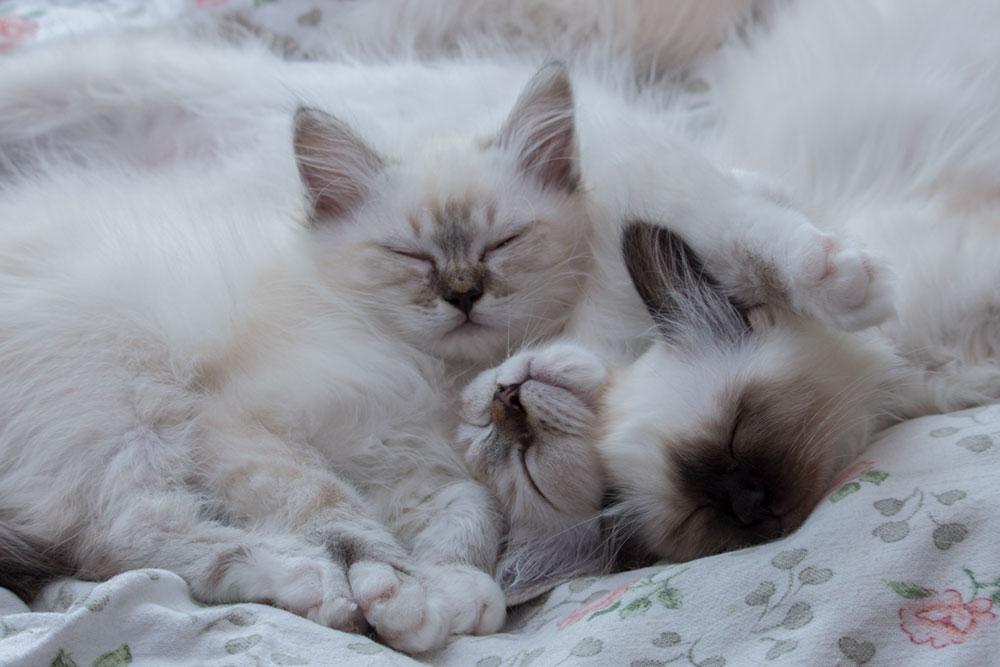 Katzenverhalten im Katzenrudel