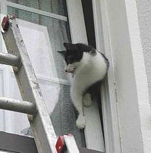 Gefahren von Kippfenstern