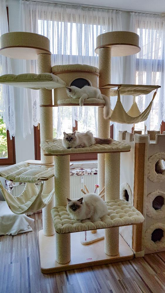 artgerechter Kratzbaum in einer Katzenwohnung