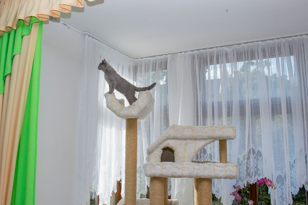 Kletterkünstler Katzenverhalten