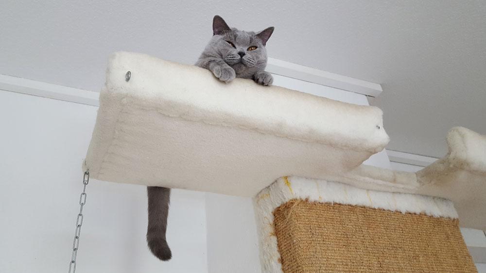 Hoher Liegeplatz einer Katze