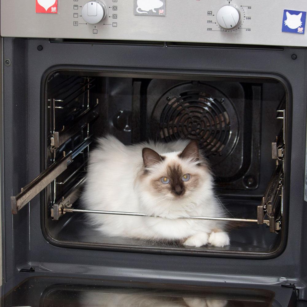 Gefahren im Backofen für Katzen