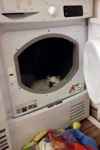 Vorischt, das kann zur tödlichen Falle werden: Katze im Wäschetrockner